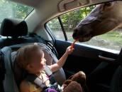 Little sis feeding the deer.