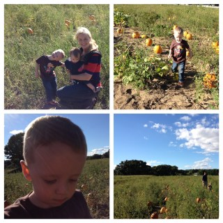 Pumpkin Picking at Jaswell's Farm