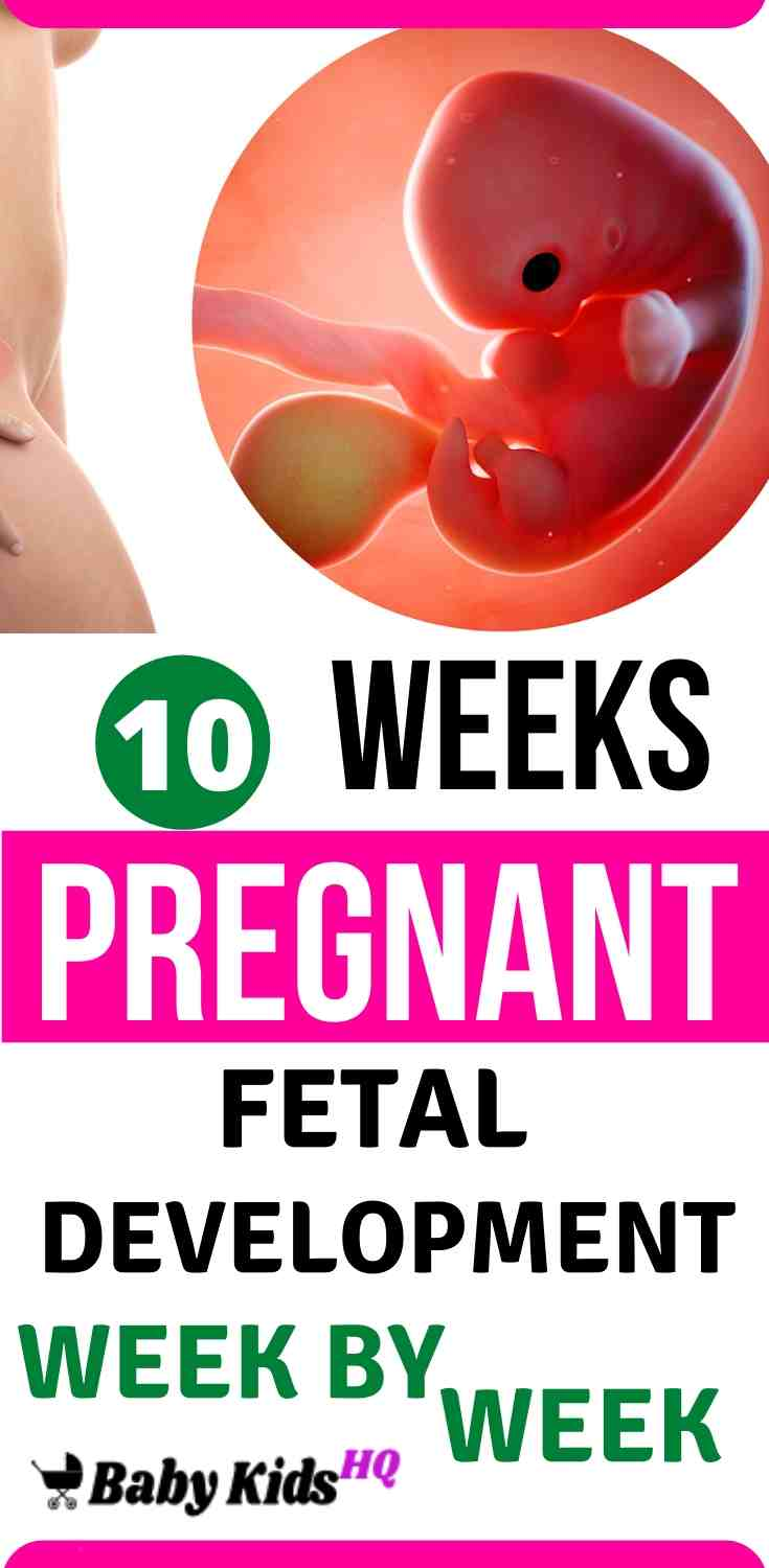 Baby Development in womb 10 Weeks Pregnant - Symptoms, Baby Bump, Tips, Fetal Heart Rate and Development