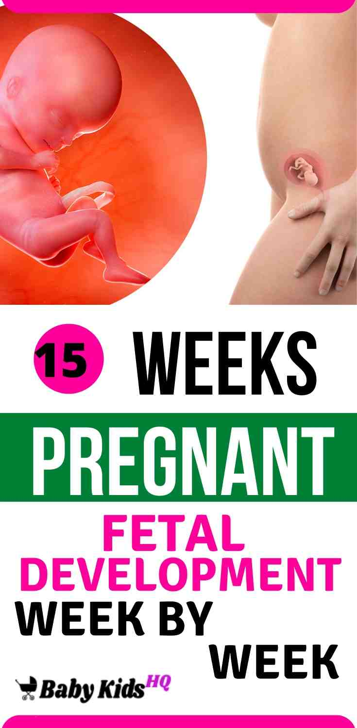 Baby Development In Womb: 15 Weeks Pregnant 2
