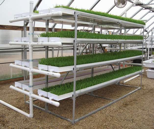 Structure-fourrage-vert-hydroponique