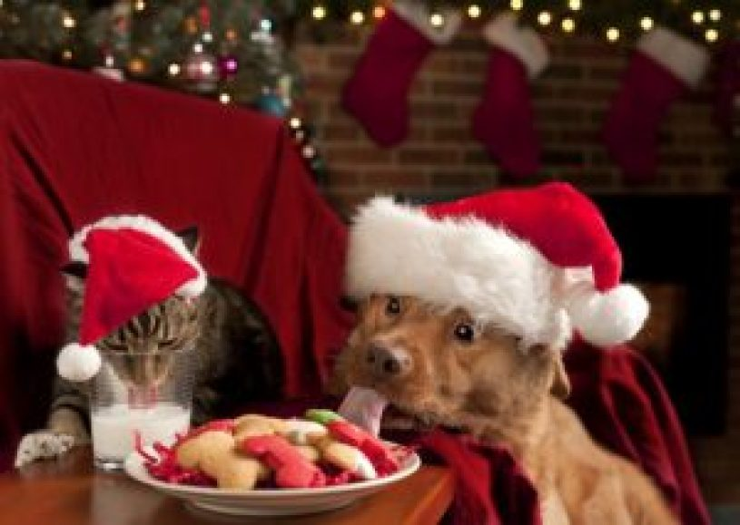 dog, cat, animals, christmas. treat