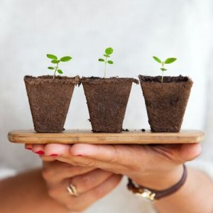 how to grow food at home