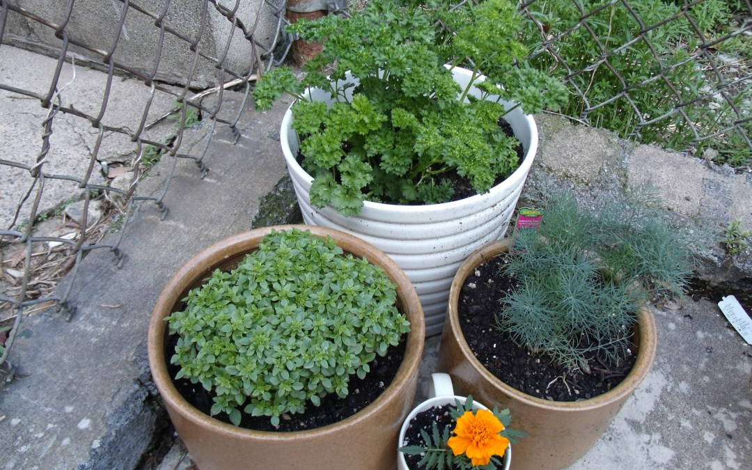 3 Amazing Container Gardening Ideas