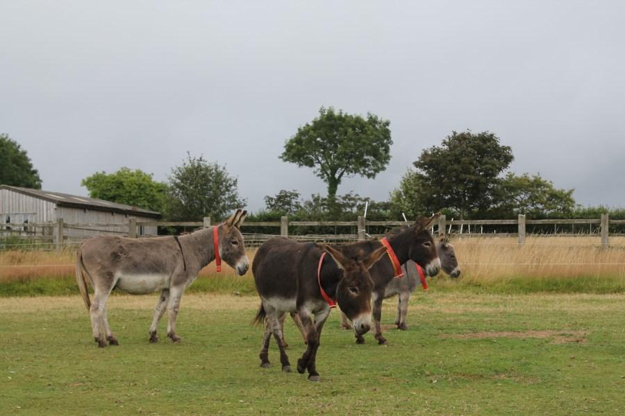 A Toddler's Weekend in East Devon