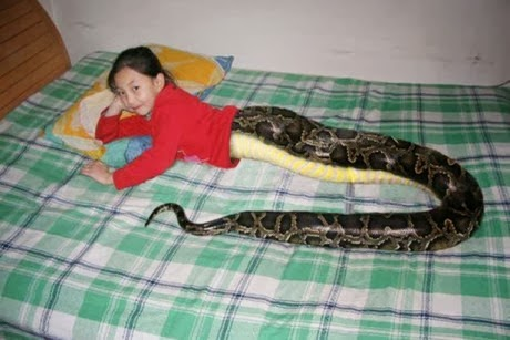Snake-Girl-Attracts-Crowd-Tourists-to-Thailand