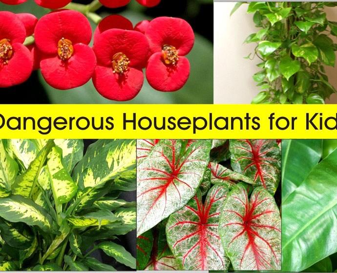 Dangerous Houseplants for Kids (Health Hazards)