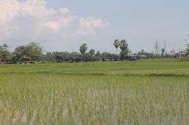 Pemandangan menuju Rammang-rammang