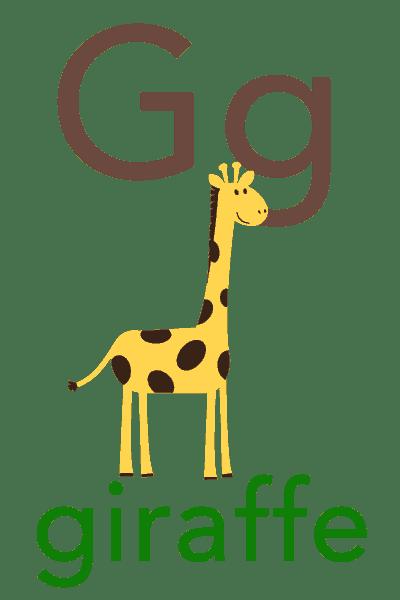 Baby ABC Flashcard - G for giraffe