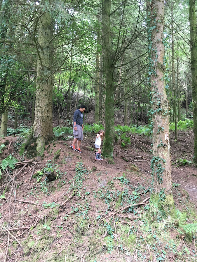 A Trip to Haldon Forest