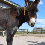 #SchoolHols2017 – The Donkey Sanctuary