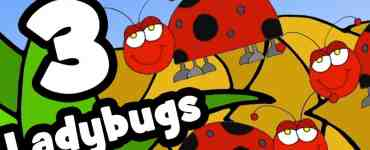 Three Ladybugs