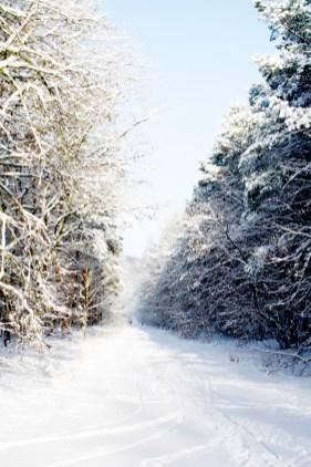 Winter Dezember8