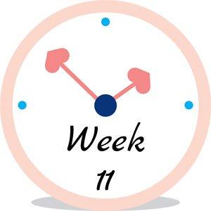 Zwangerschap week 11