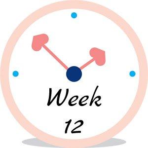 Zwangerschap week 12