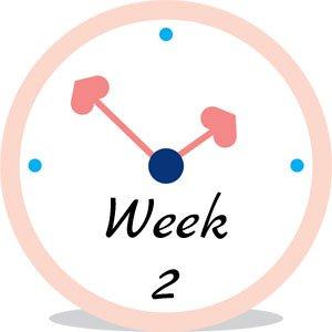 Zwangerschap week 2