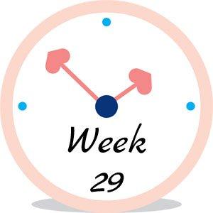 Zwangerschap week 29