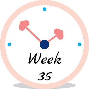 Zwangerschap week 35