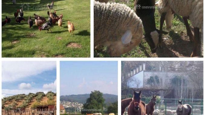 Casas rurales con animales