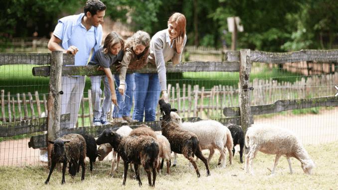 La pradera de los animales