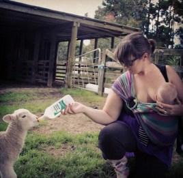 Feeding a lamb a bottle whilst also breastfeeding Jai #feedallthebabies