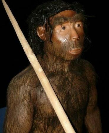 Manusia Purba Pithecanthropus Mojokertensis : manusia, purba, pithecanthropus, mojokertensis, Inilah, Jenis, Manusia, Purba, Ditemukan, Indonesia