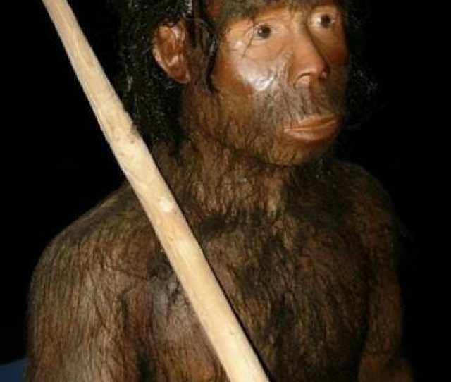 Inilah  Jenis Manusia Purba Yang Ditemukan Di Indonesia
