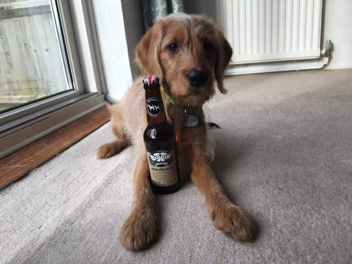Bottom Sniffer Beer for Dogs Review