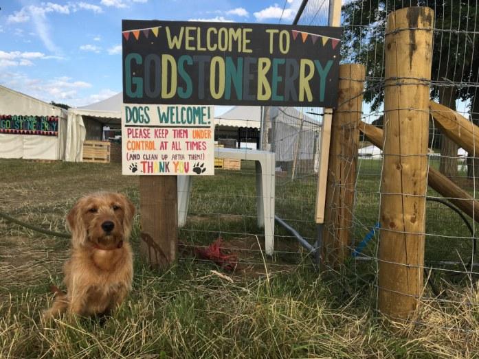 Indy at Godstoneberry