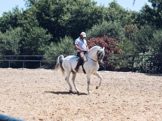 Bacchus Travel Andalusia Horse Riding