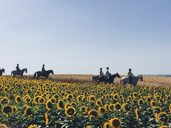 Bacchus Travel Andalusia Horseback Sunflower