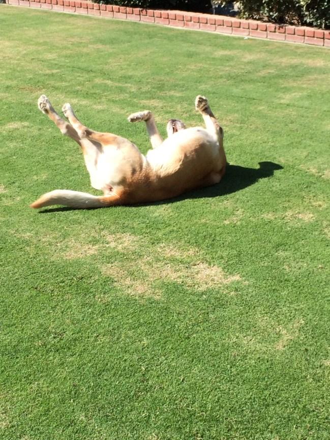 dog, life, relax, farm
