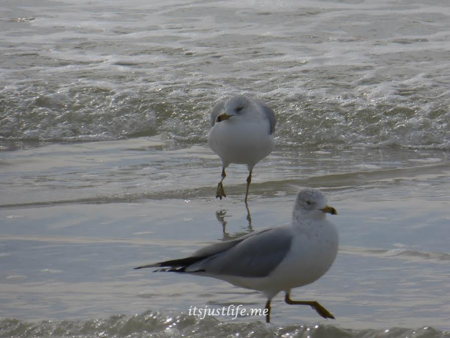 seagulls on itsjustlife,me