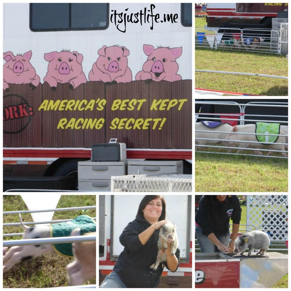 Swifty Swine Collage