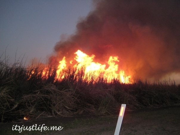 cane fire