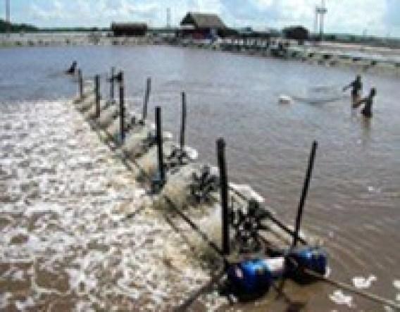 BKC – Chất khử trùng hiệu quả trong nuôi trồng thủy sản