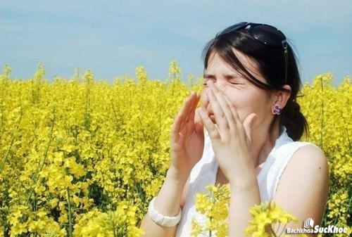 Dị ứng phấn hoa