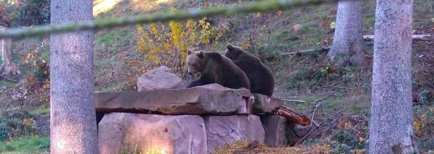 Wolf and Bear Park