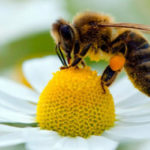 Биологично пчеларство