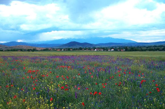 fallow-year-flower-meadow