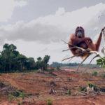 Палмовото масло причинява масово обезлесяване, убива животните и ни разболява!