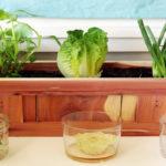 Ето как да дадете нов живот на растителните си отпадъци