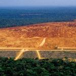Тези шокиращи снимки на изчезваща дъждовна гора в Амазония  са резултат от ненужен избор