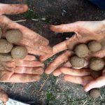 Удивително лесен и забавен начин да се засее  градина с растителни бомби
