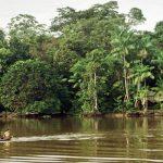Амазонската гора е резултат от 8000-годишен експеримент