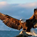 Денят на орела