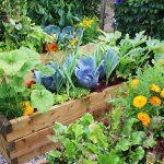 Алелопатия при зеленчуци устойчиви на болести