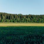 Голямото залесяване в България