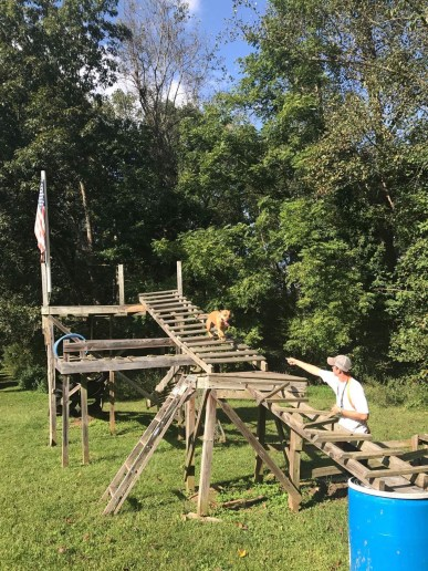 Backcountry K-9 Training off leash dog training