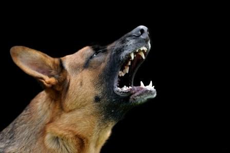 Dog Behavior Modification training